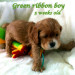 1-green ribbon boy 5wks 1