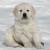 Ad_Puppy