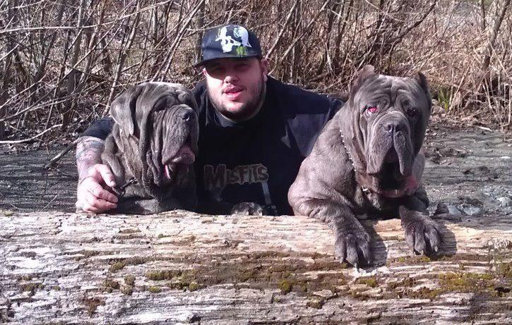 Neapolitan mastiff puppies - Image 2